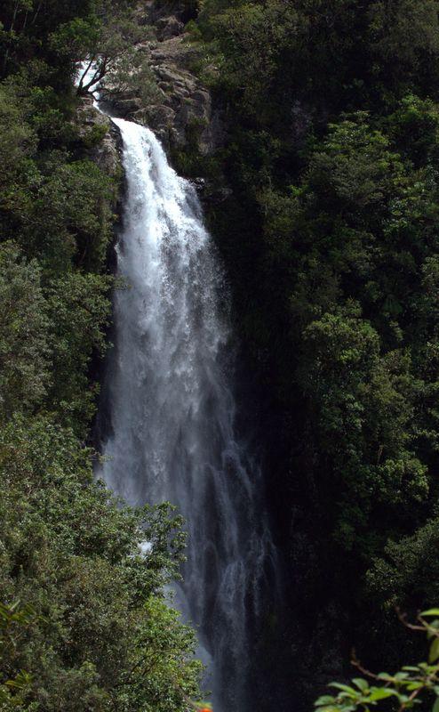 CASCADE DU CHIEN FORET DE L'EDEN/LIBERIA