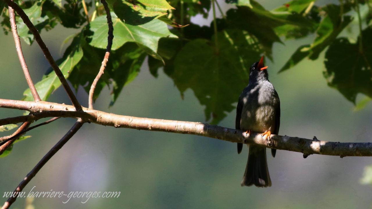 L'oiseau qui chante ne sait pas si on l'entendra.(Proverbe)